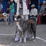 平成27年5月3日 秋田県大館市